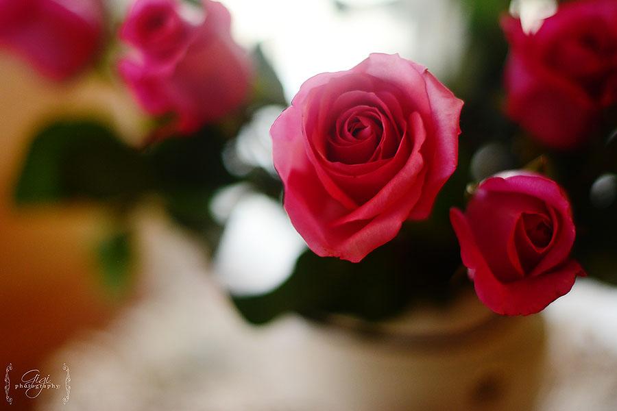 Hot Toast & Rose Petal Jelly » Gigi's Blog